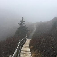 A boardwalk on the North Head, disappearing into fog.